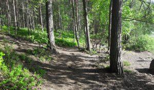 Luonnon voimaa - Lilla Saaristo opastaa, www.vuoksiwellness.com